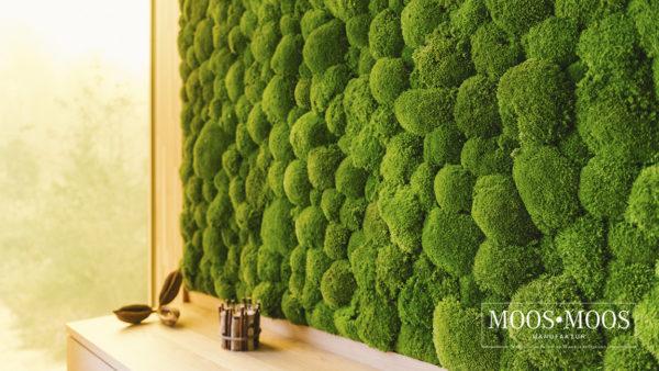 Moos•Moos Manufaktur Wandverkleidung aus Ballenmoos